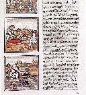 Codex_florentino_51_9.jpg